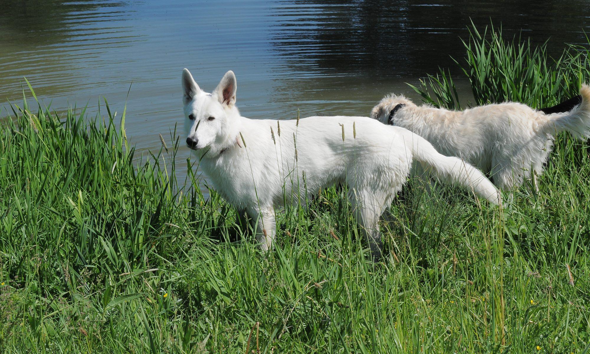 Gabis Hundeschule
